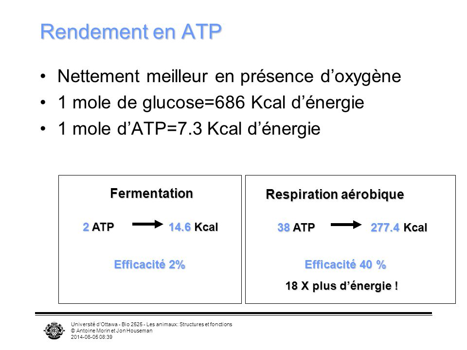 Rendement en ATP Nettement meilleur en présence d'oxygène