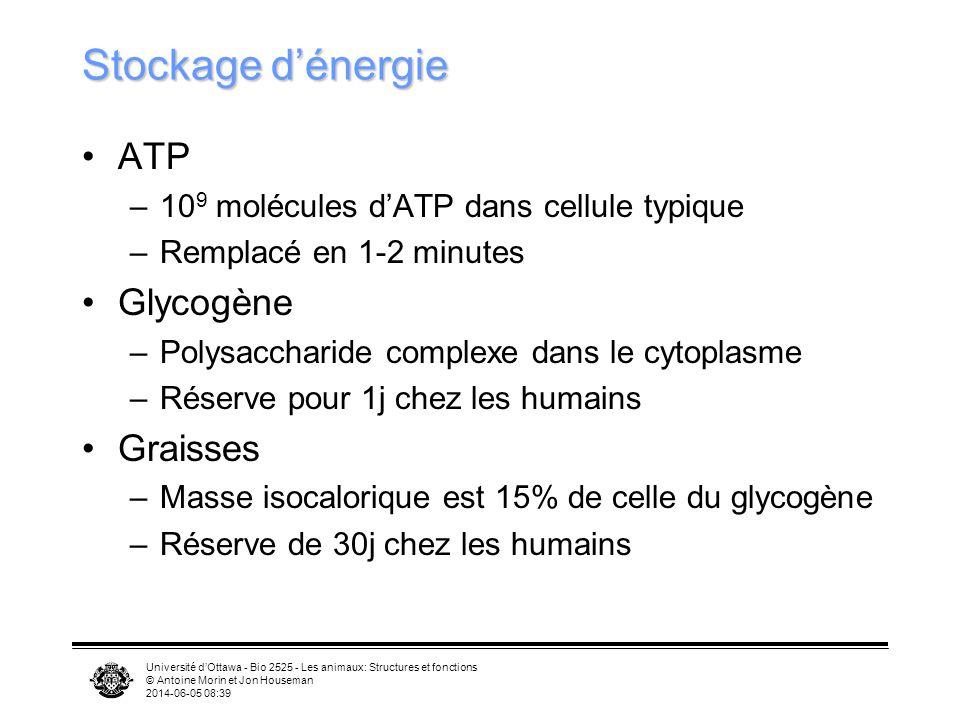 Stockage d'énergie ATP Glycogène Graisses