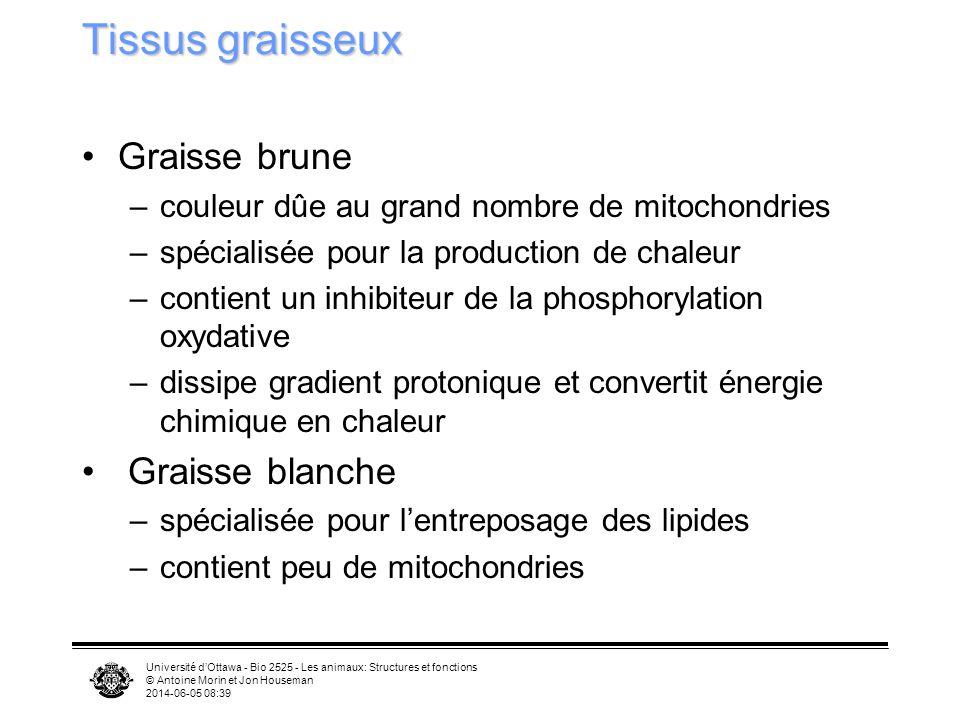 Tissus graisseux Graisse brune Graisse blanche