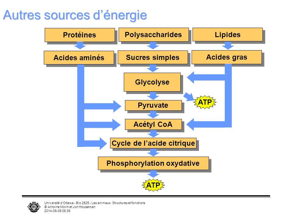 Autres sources d'énergie