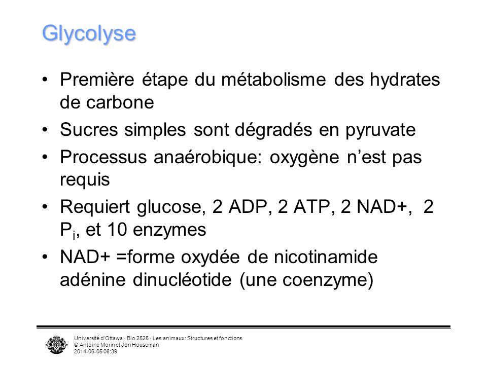 Glycolyse Première étape du métabolisme des hydrates de carbone