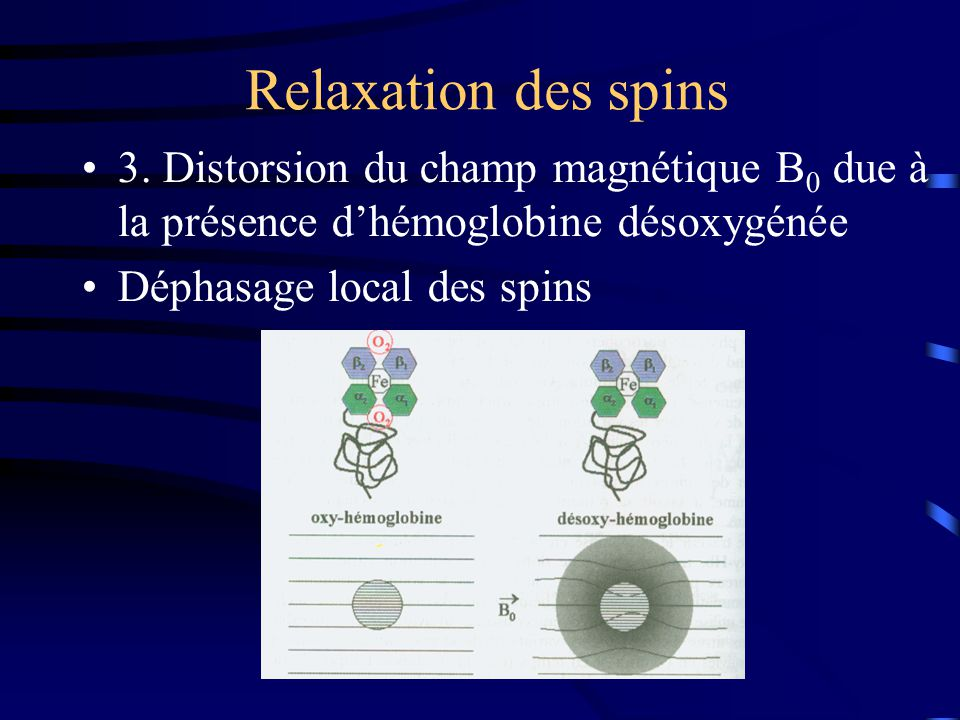 Relaxation des spins 3. Distorsion du champ magnétique B0 due à la présence d'hémoglobine désoxygénée.