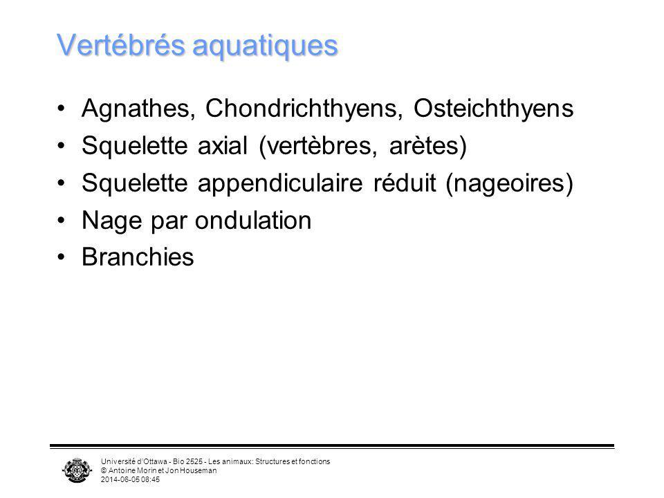 Vertébrés aquatiques Agnathes, Chondrichthyens, Osteichthyens