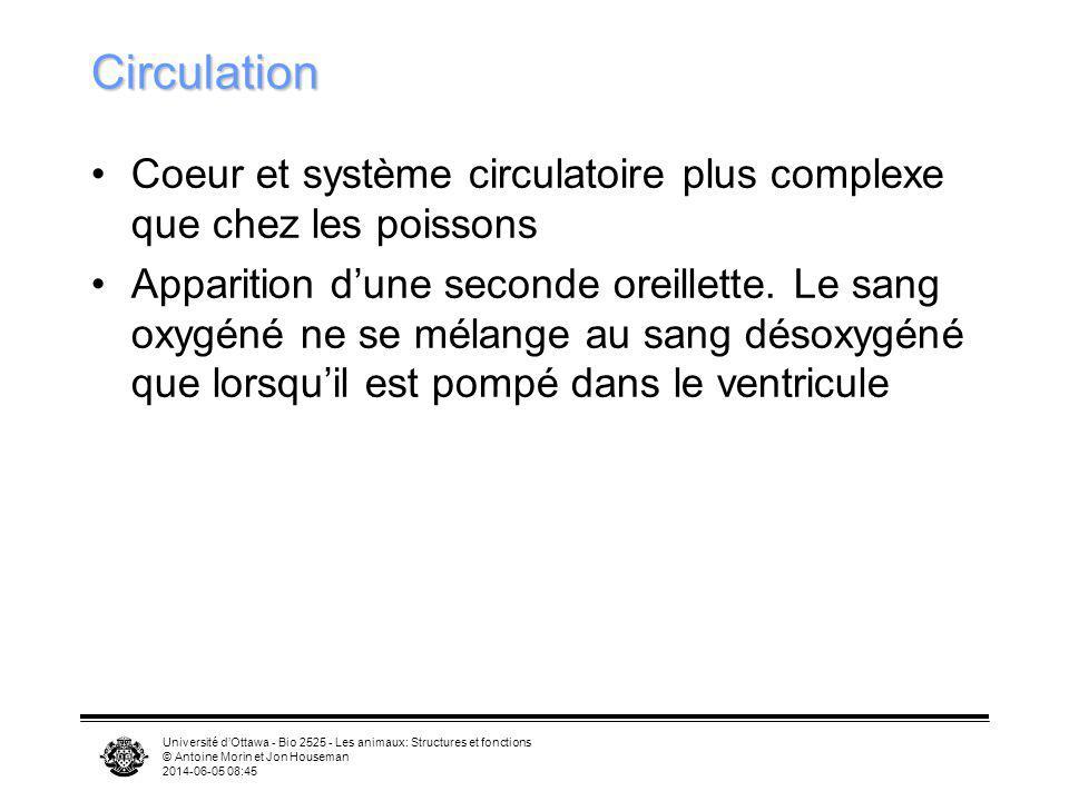 Circulation Coeur et système circulatoire plus complexe que chez les poissons.