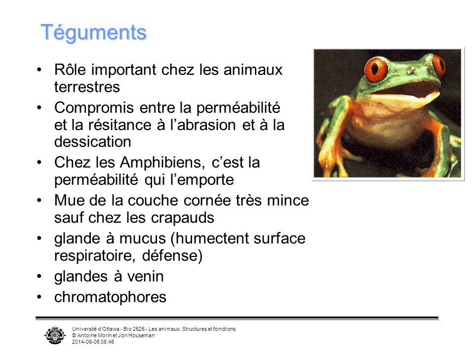 Téguments Rôle important chez les animaux terrestres