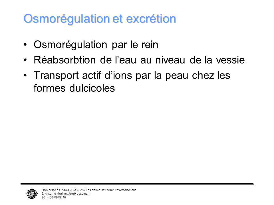 Osmorégulation et excrétion