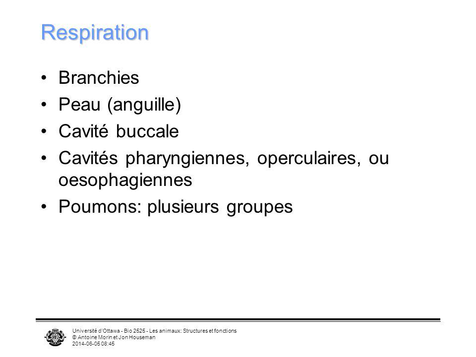 Respiration Branchies Peau (anguille) Cavité buccale