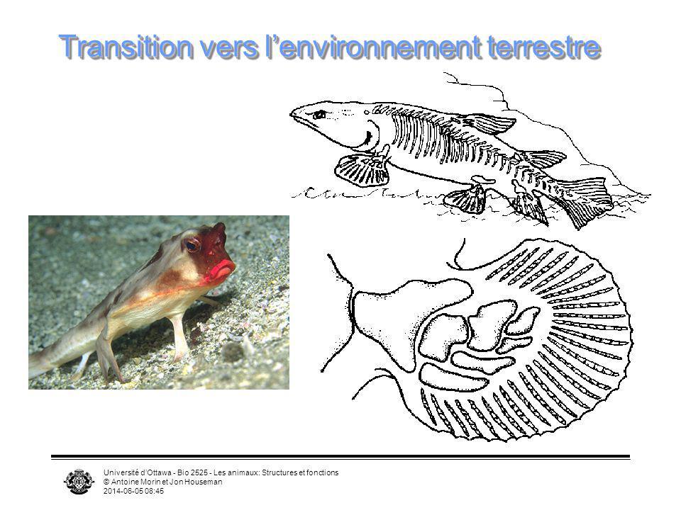 Transition vers l'environnement terrestre