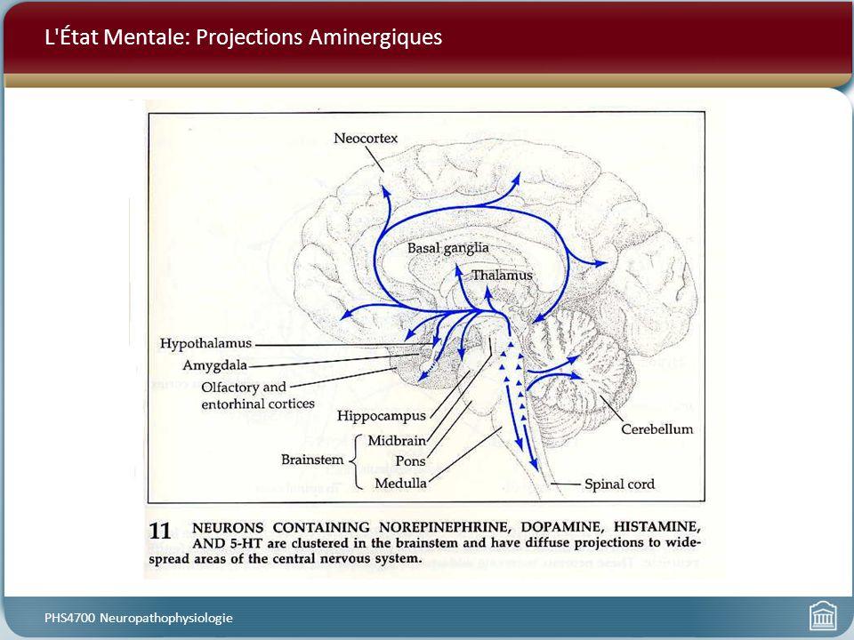 L État Mentale: Projections Aminergiques