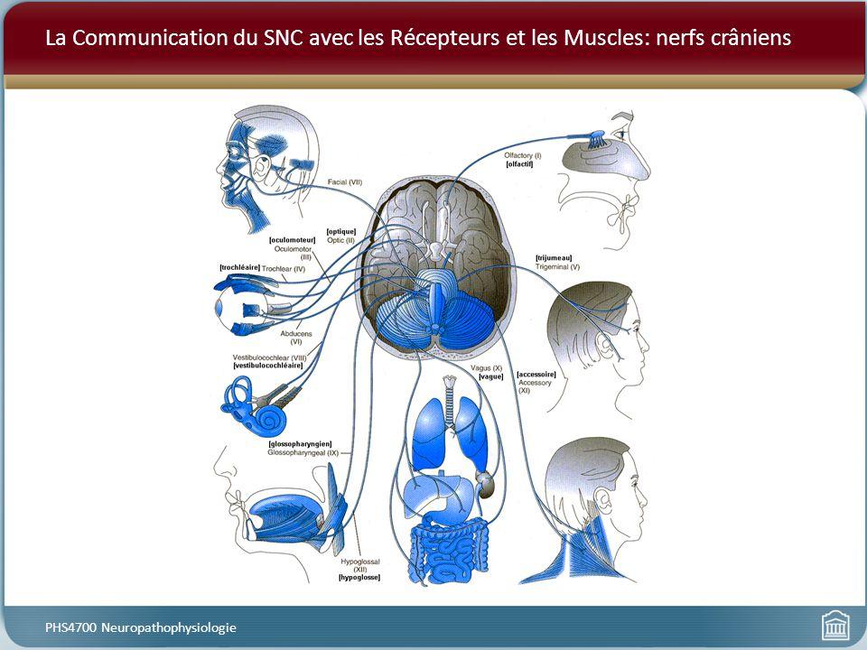 La Communication du SNC avec les Récepteurs et les Muscles: nerfs crâniens