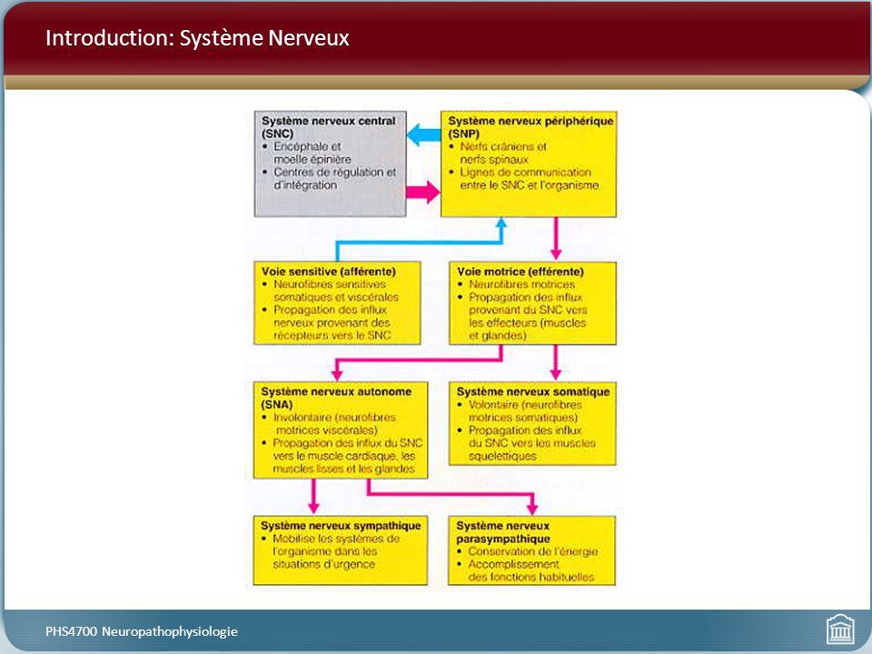 Introduction: Système Nerveux