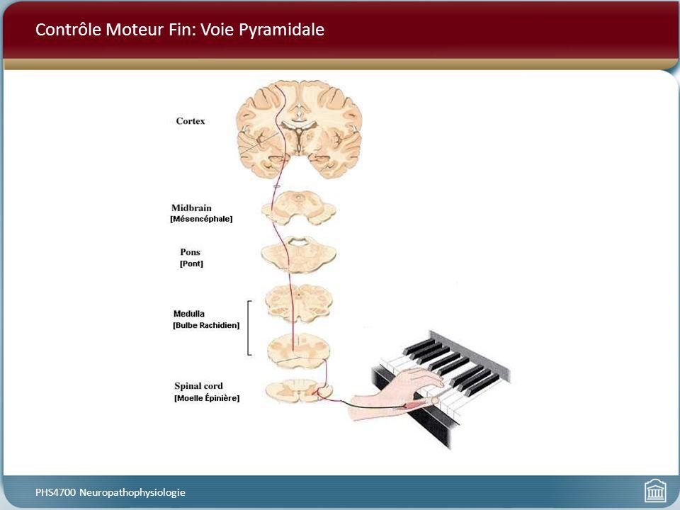 Phs4700 neuropathophysiologie ppt t l charger for Dans cette voie
