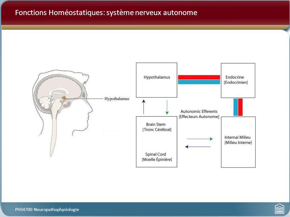 Fonctions Homéostatiques: système nerveux autonome