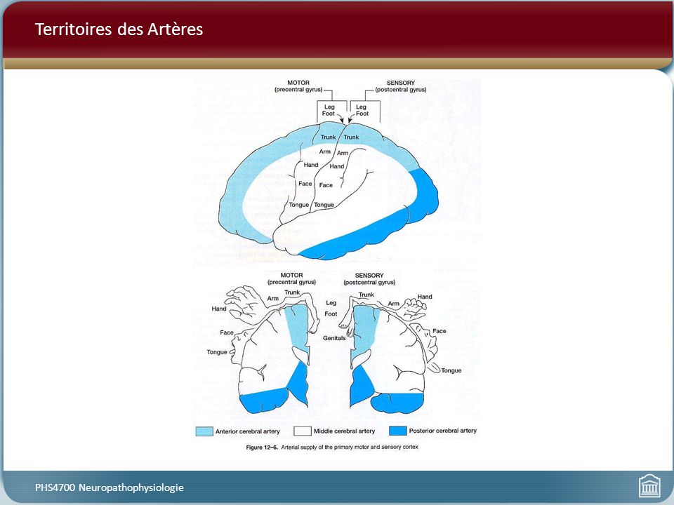 Territoires des Artères