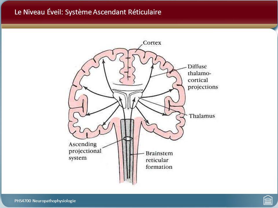 Le Niveau Éveil: Système Ascendant Réticulaire