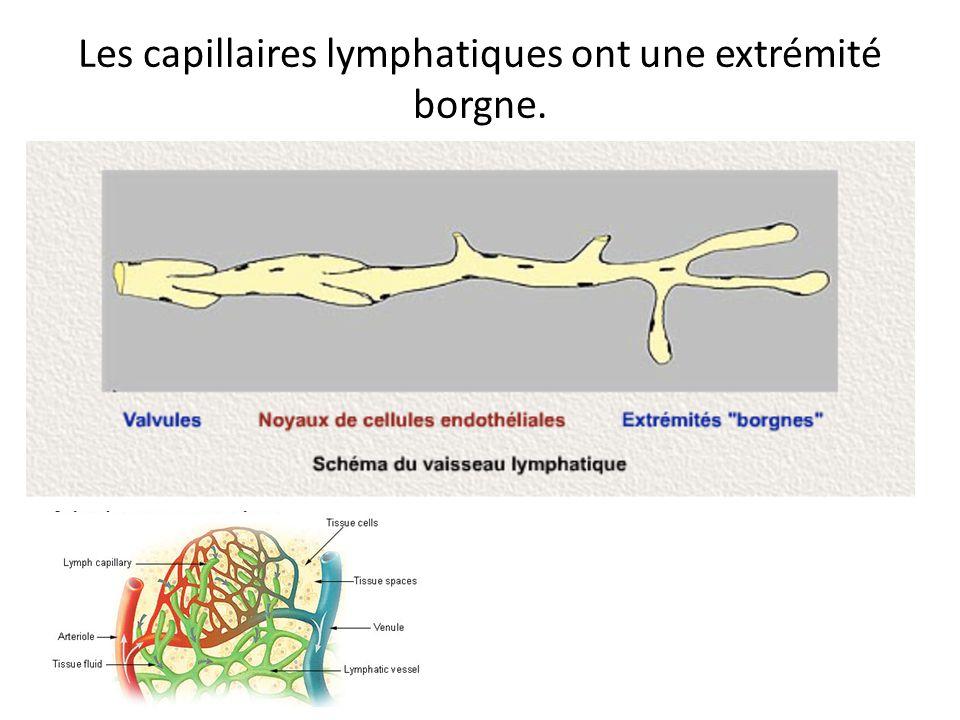 Les capillaires lymphatiques ont une extrémité borgne.
