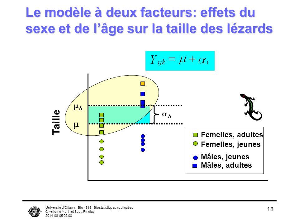 Le modèle à deux facteurs: effets du sexe et de l'âge sur la taille des lézards