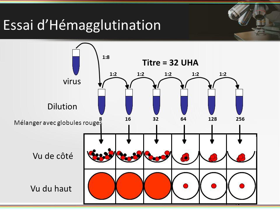 Essai d'Hémagglutination