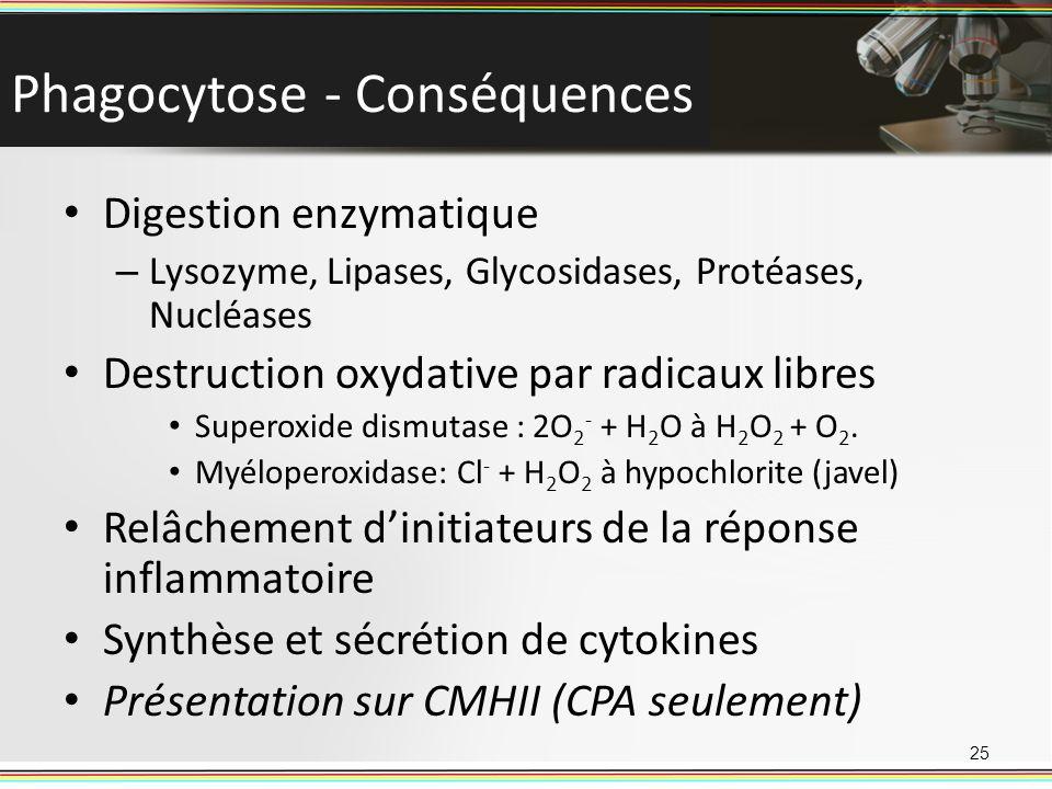 Phagocytose - Conséquences