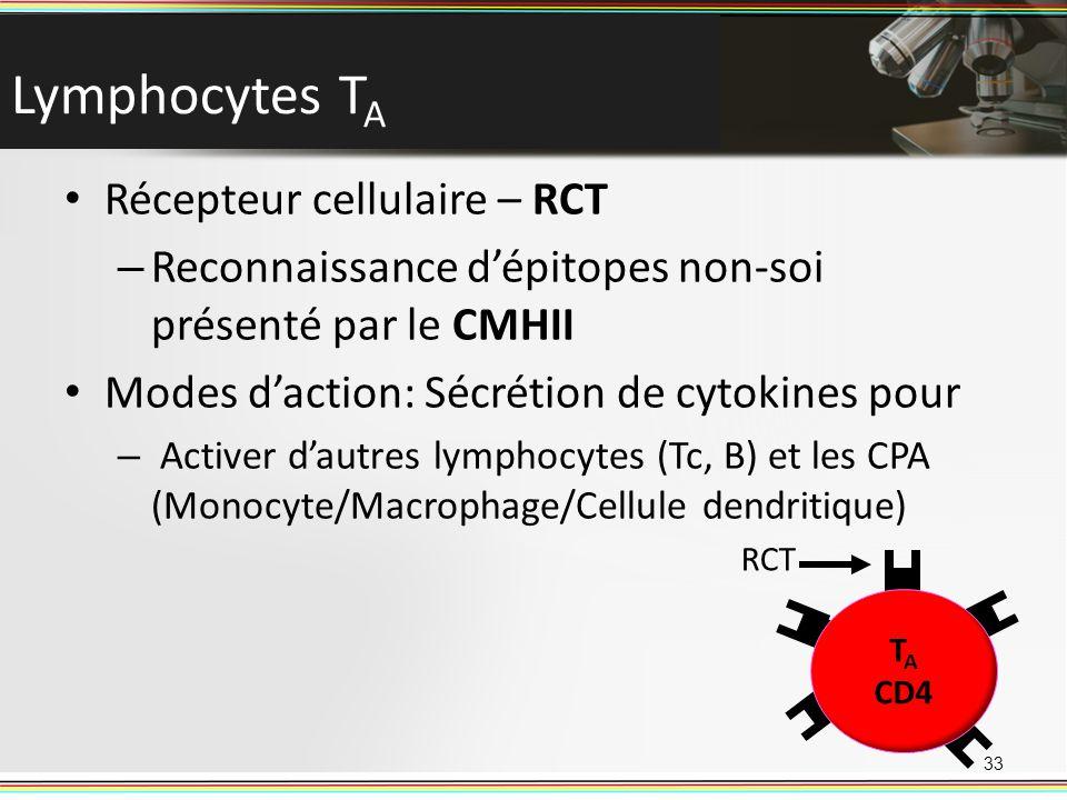 Lymphocytes TA Récepteur cellulaire – RCT