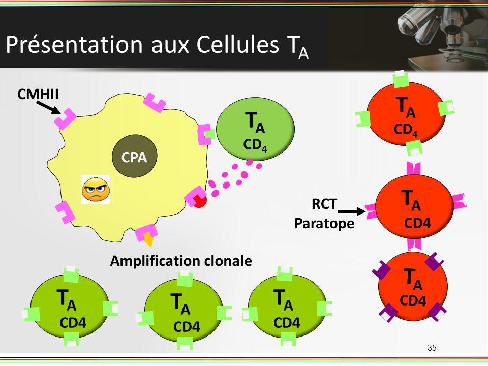 Présentation aux Cellules TA