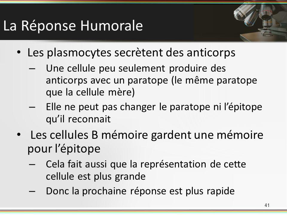 La Réponse Humorale Les plasmocytes secrètent des anticorps
