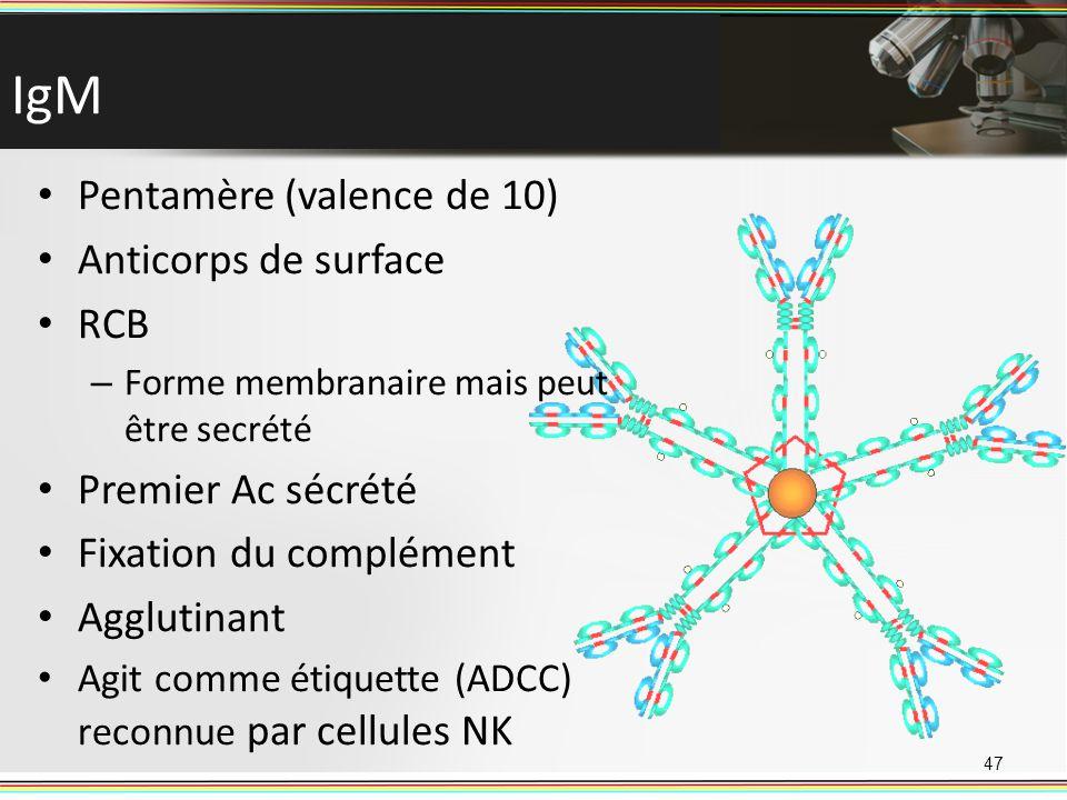 IgM Pentamère (valence de 10) Anticorps de surface RCB