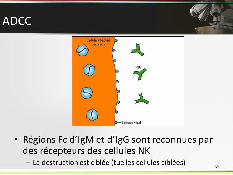 ADCC Régions Fc d'IgM et d'IgG sont reconnues par des récepteurs des cellules NK.