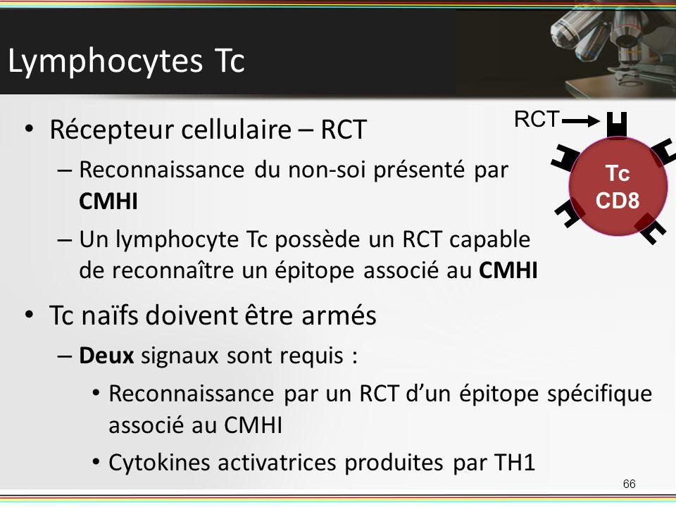 Lymphocytes Tc Récepteur cellulaire – RCT Tc naïfs doivent être armés