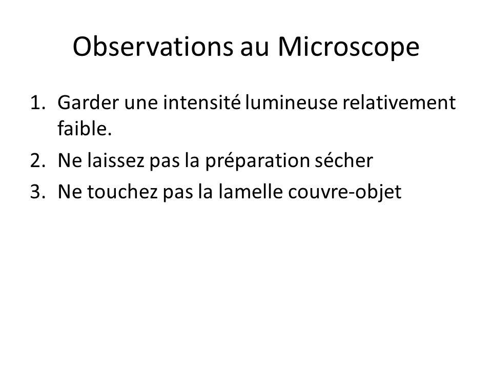 Observations au Microscope
