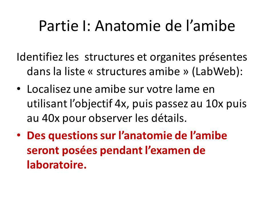 Partie I: Anatomie de l'amibe