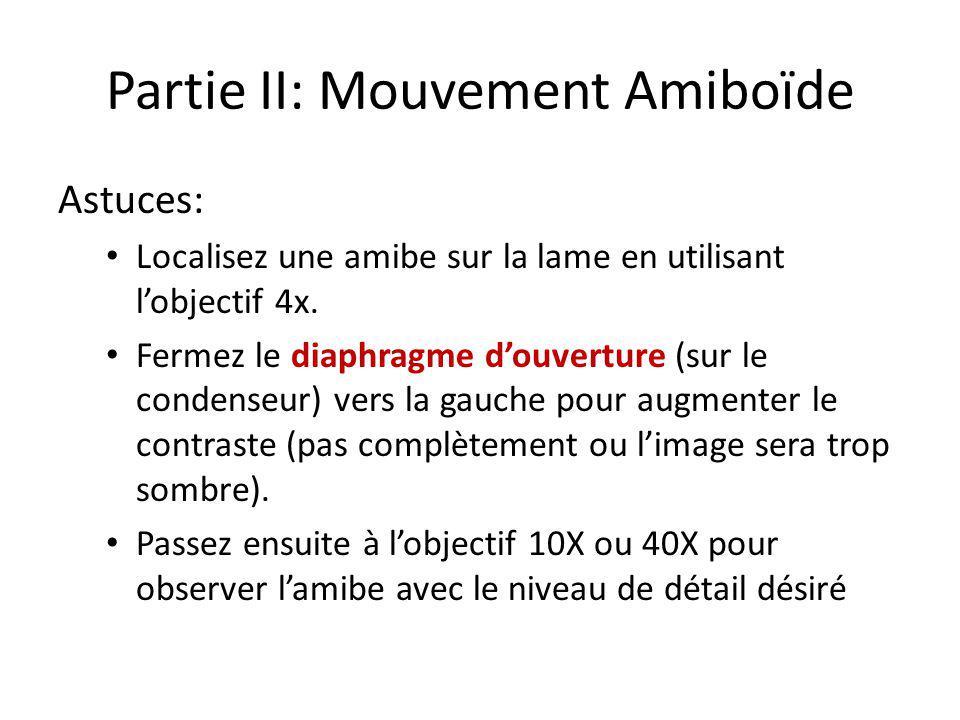 Partie II: Mouvement Amiboïde