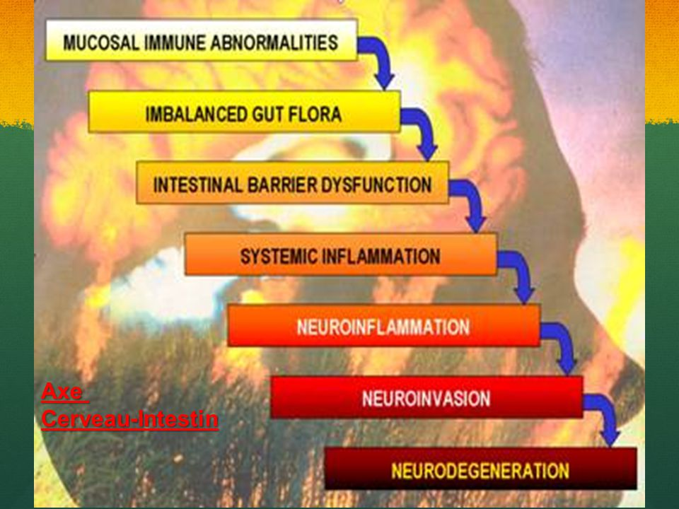 Axe Cerveau-Intestin