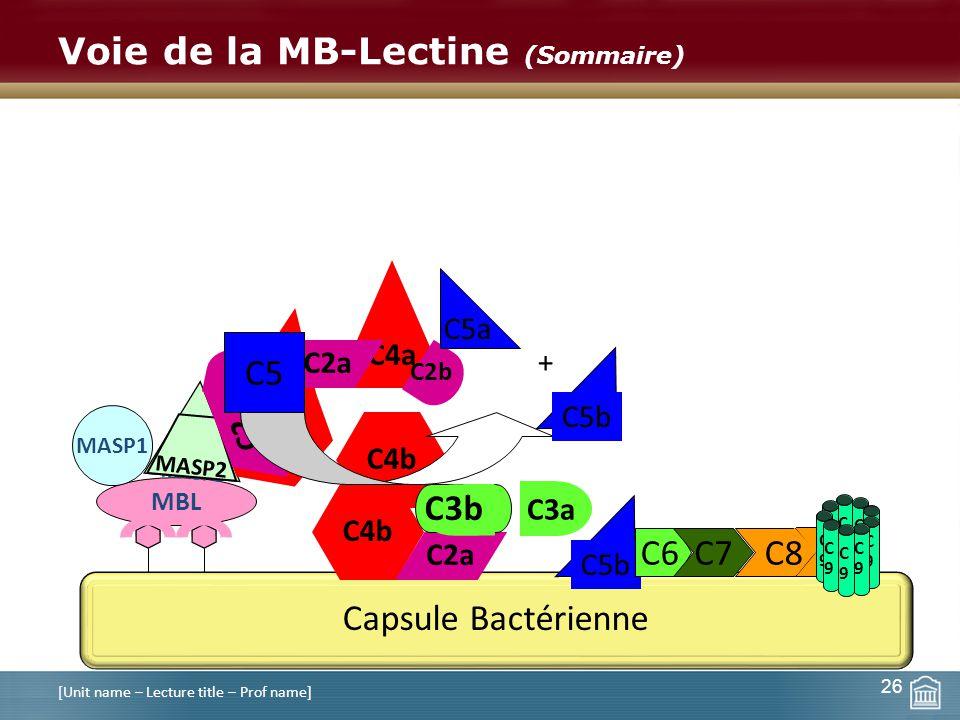Voie de la MB-Lectine (Sommaire)