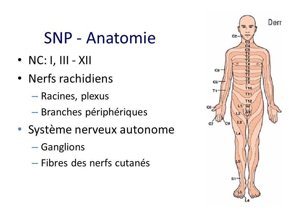SNP - Anatomie NC: I, III - XII Nerfs rachidiens