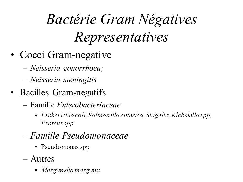 Bactérie Gram Négatives Representatives