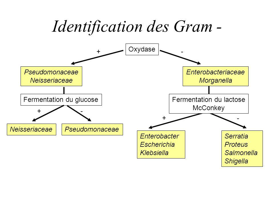 Identification des Gram -