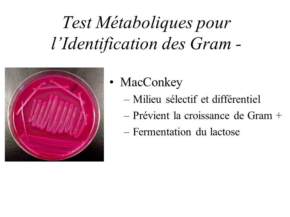 Test Métaboliques pour l'Identification des Gram -
