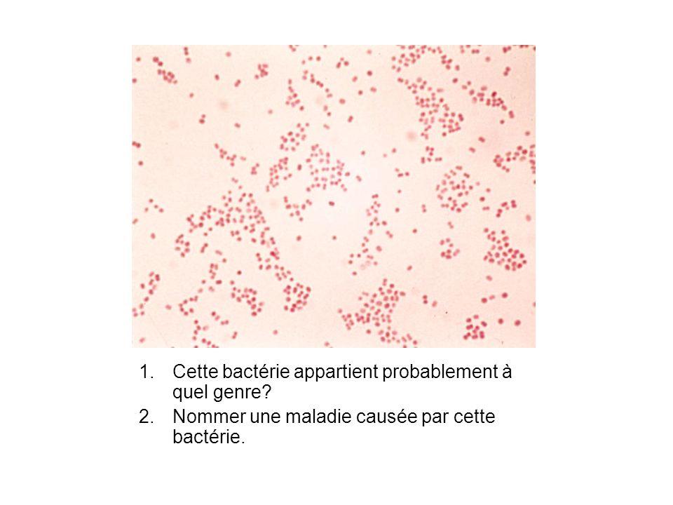 Cette bactérie appartient probablement à quel genre