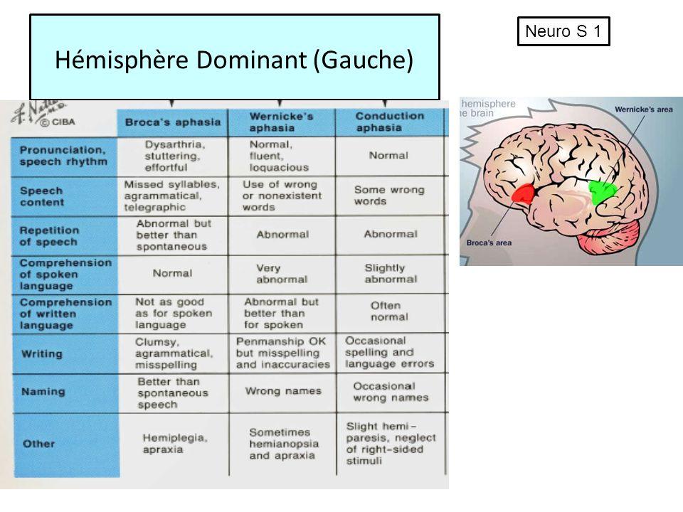 Hémisphère Dominant (Gauche)