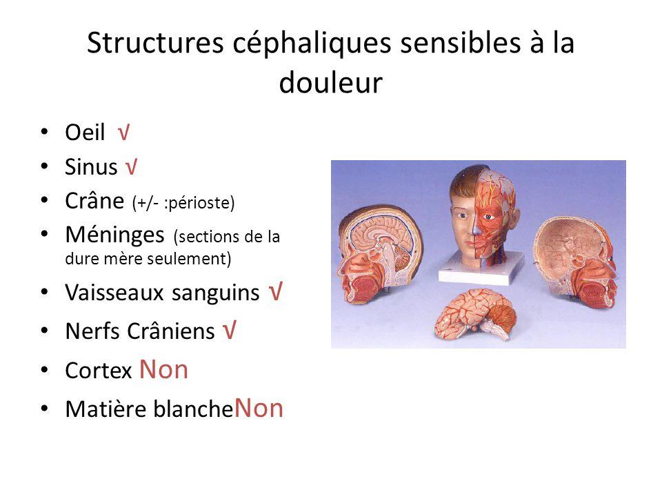 Structures céphaliques sensibles à la douleur