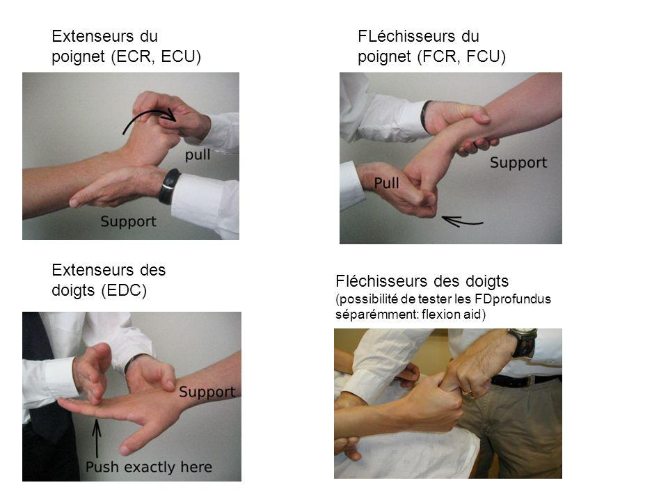 Extenseurs du poignet (ECR, ECU) FLéchisseurs du poignet (FCR, FCU)