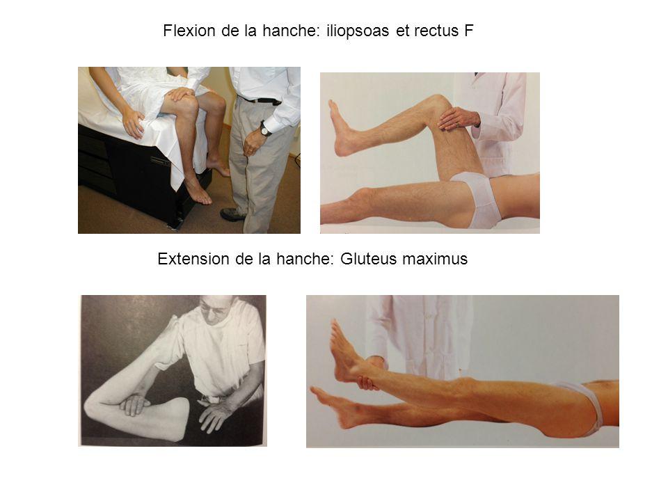 Flexion de la hanche: iliopsoas et rectus F