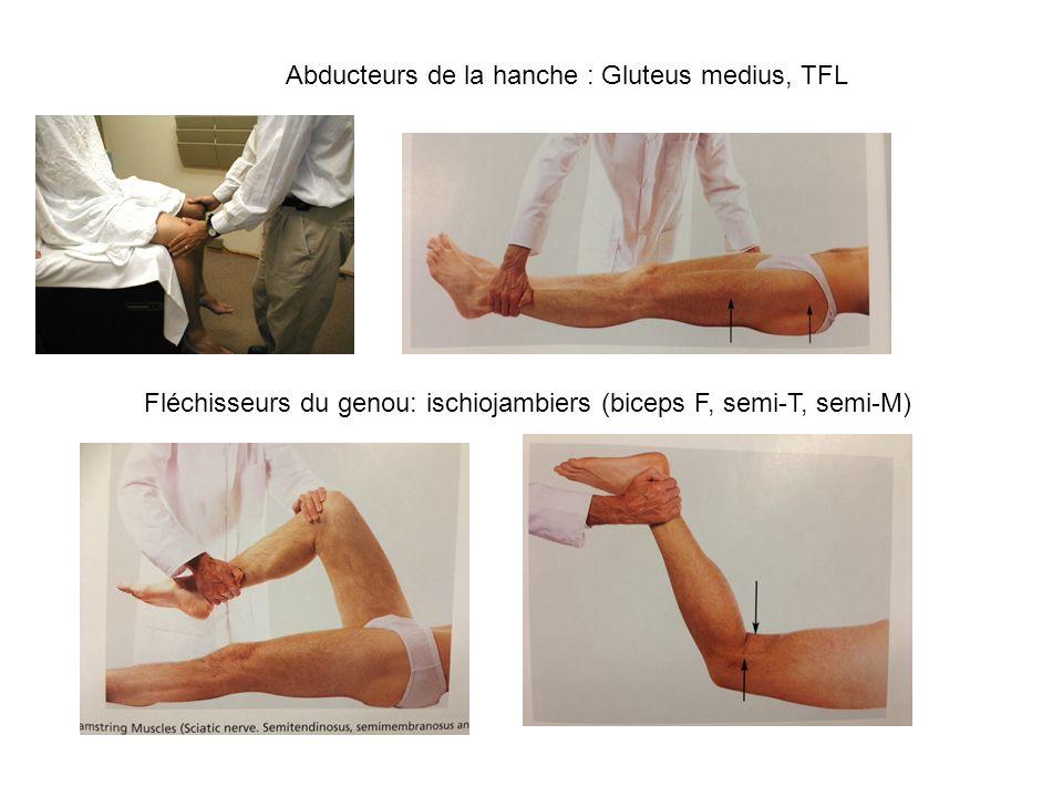 Abducteurs de la hanche : Gluteus medius, TFL