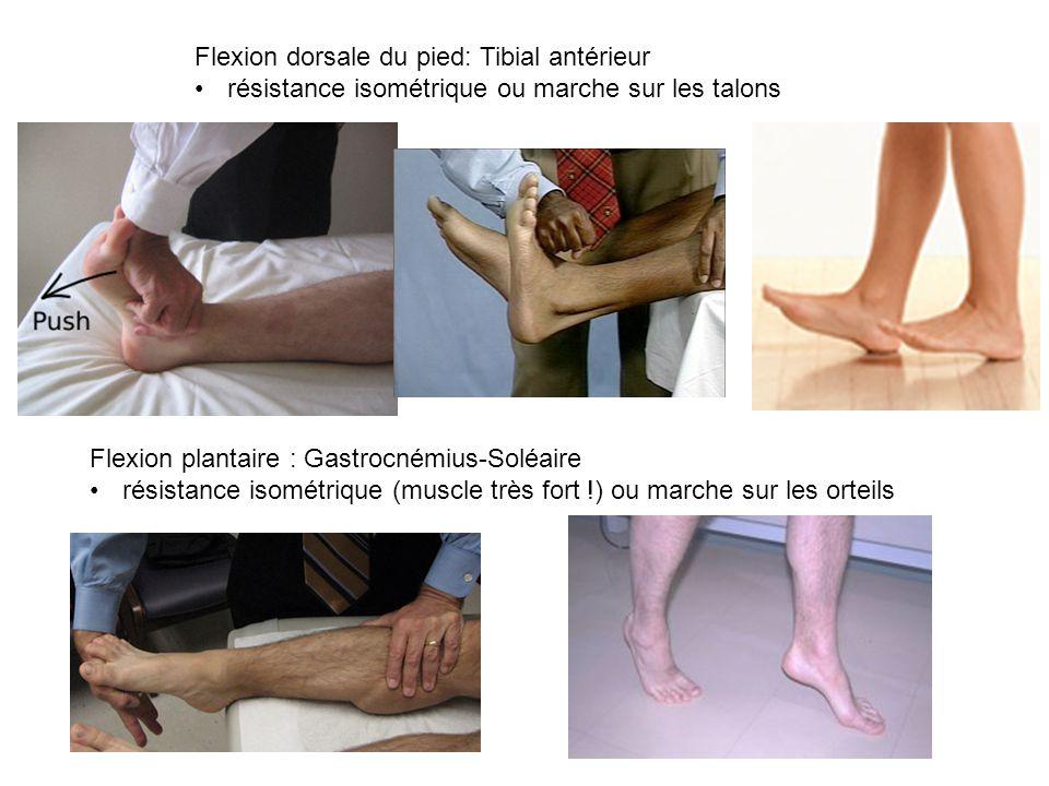 Flexion dorsale du pied: Tibial antérieur