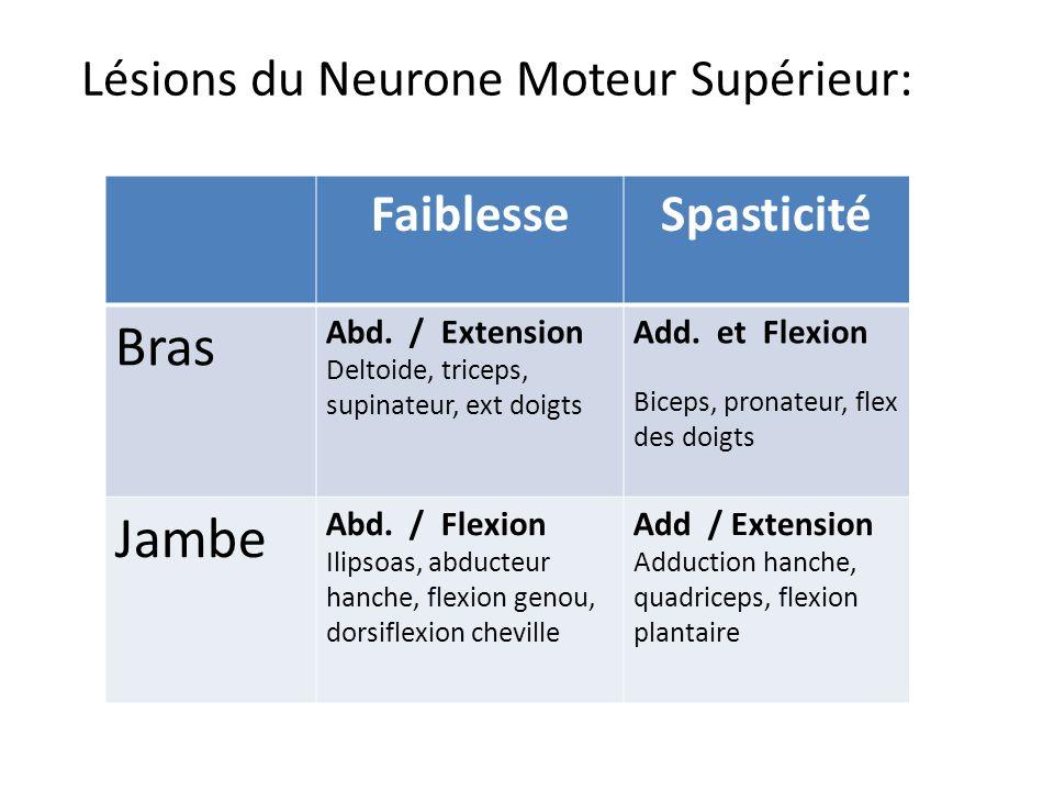 Lésions du Neurone Moteur Supérieur:
