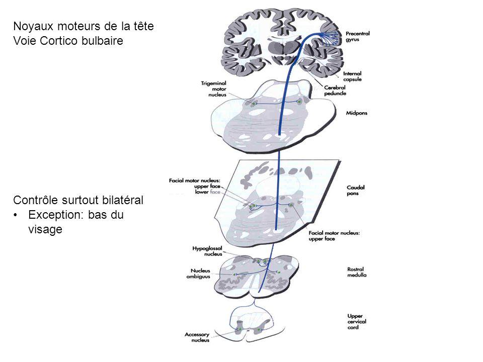 Noyaux moteurs de la tête