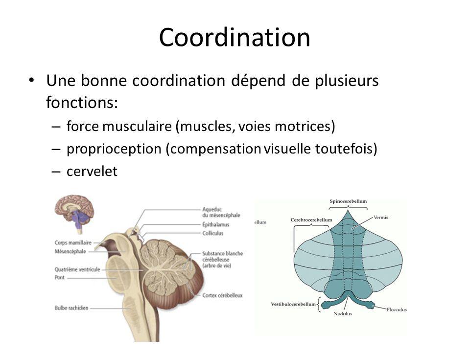 Coordination Une bonne coordination dépend de plusieurs fonctions: