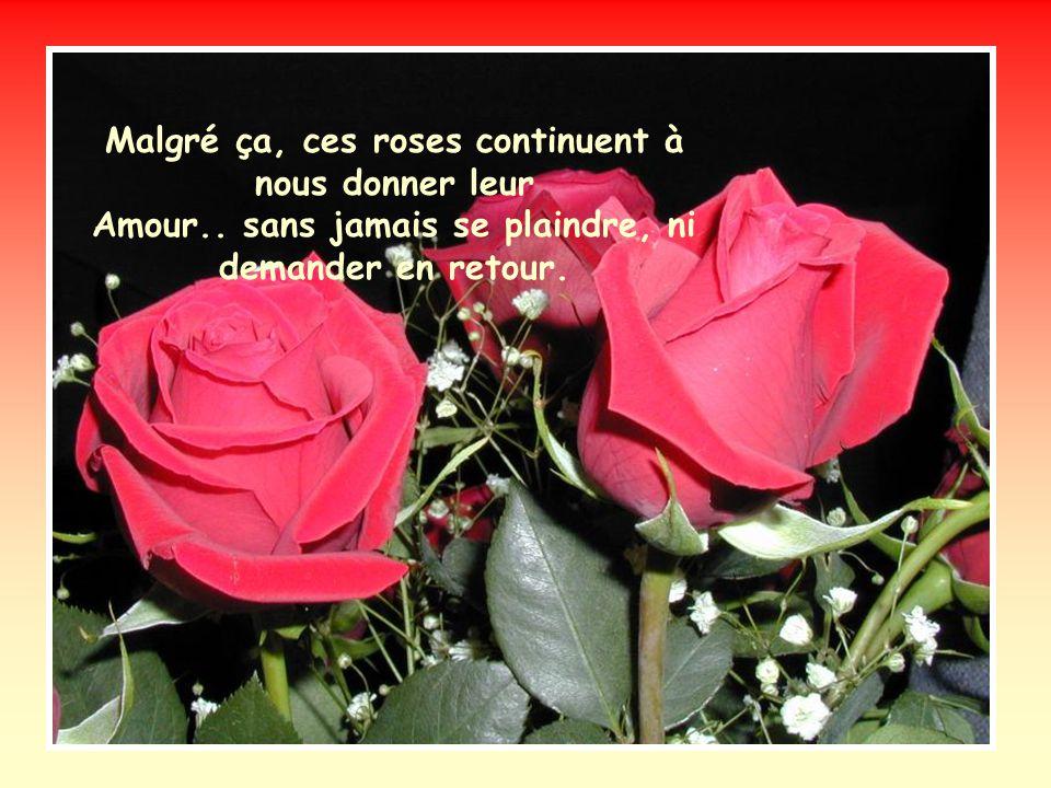 Malgré ça, ces roses continuent à nous donner leur Amour