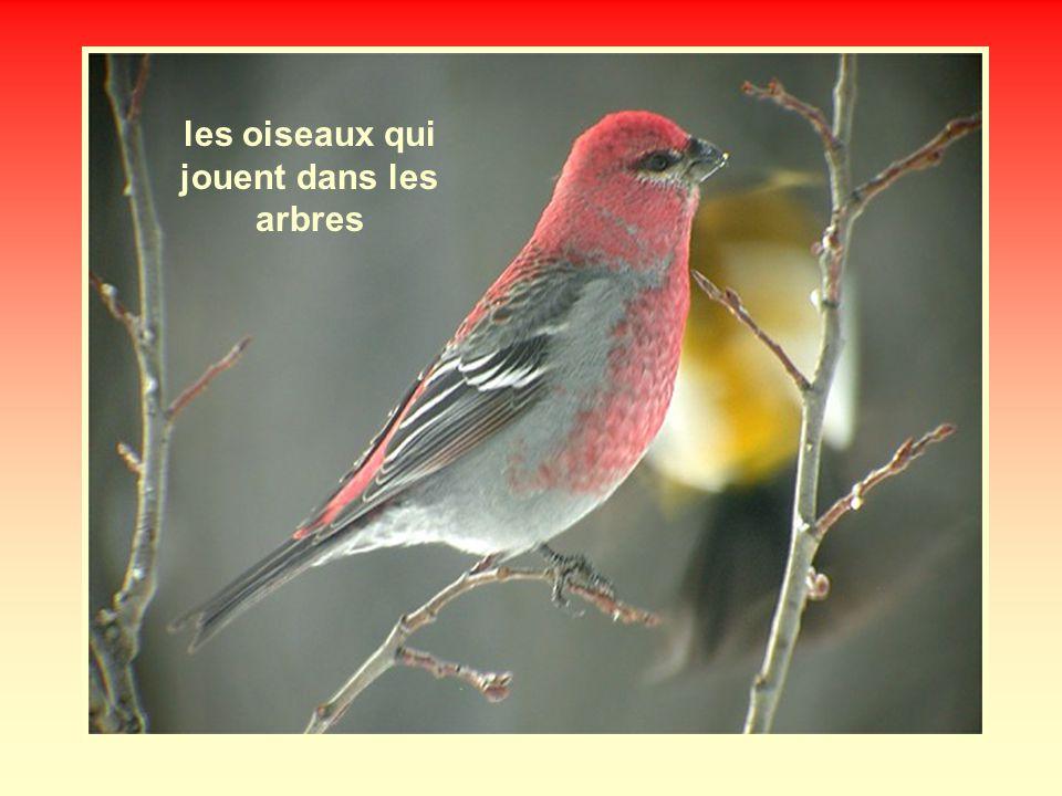 les oiseaux qui jouent dans les arbres